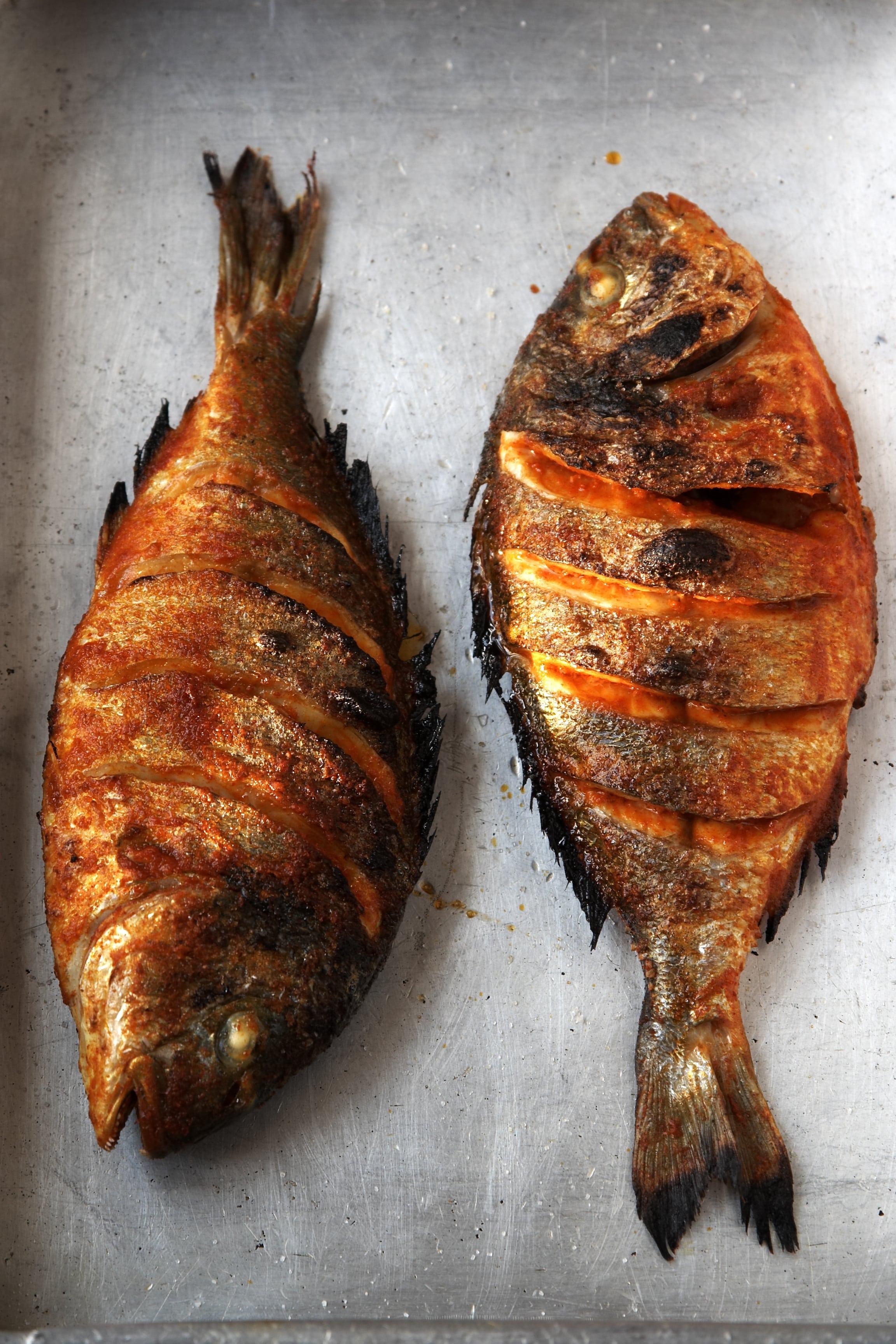 fishy 1help me-000014-min